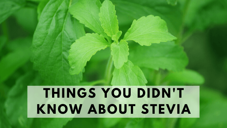 Things You Didn't Know About Stevia
