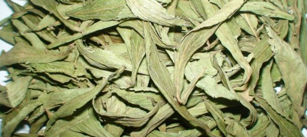 How to use dry stevia leaves